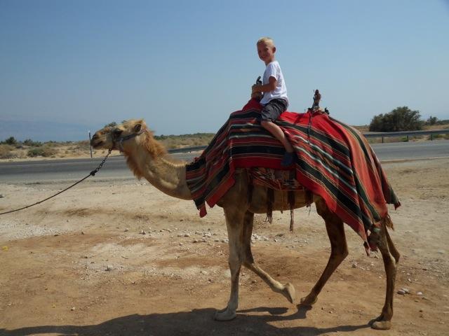 daan-op-een-kameel