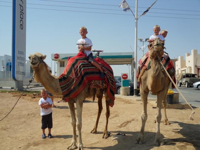drieling-op-de-kameel