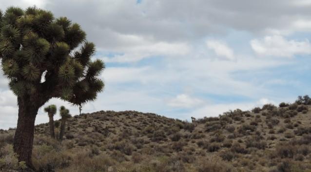 Hier en daar een cactus.