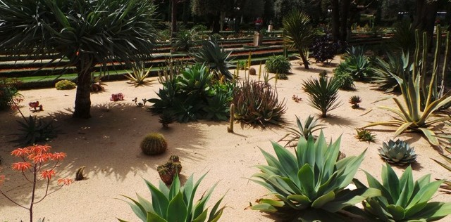 Cactusssen